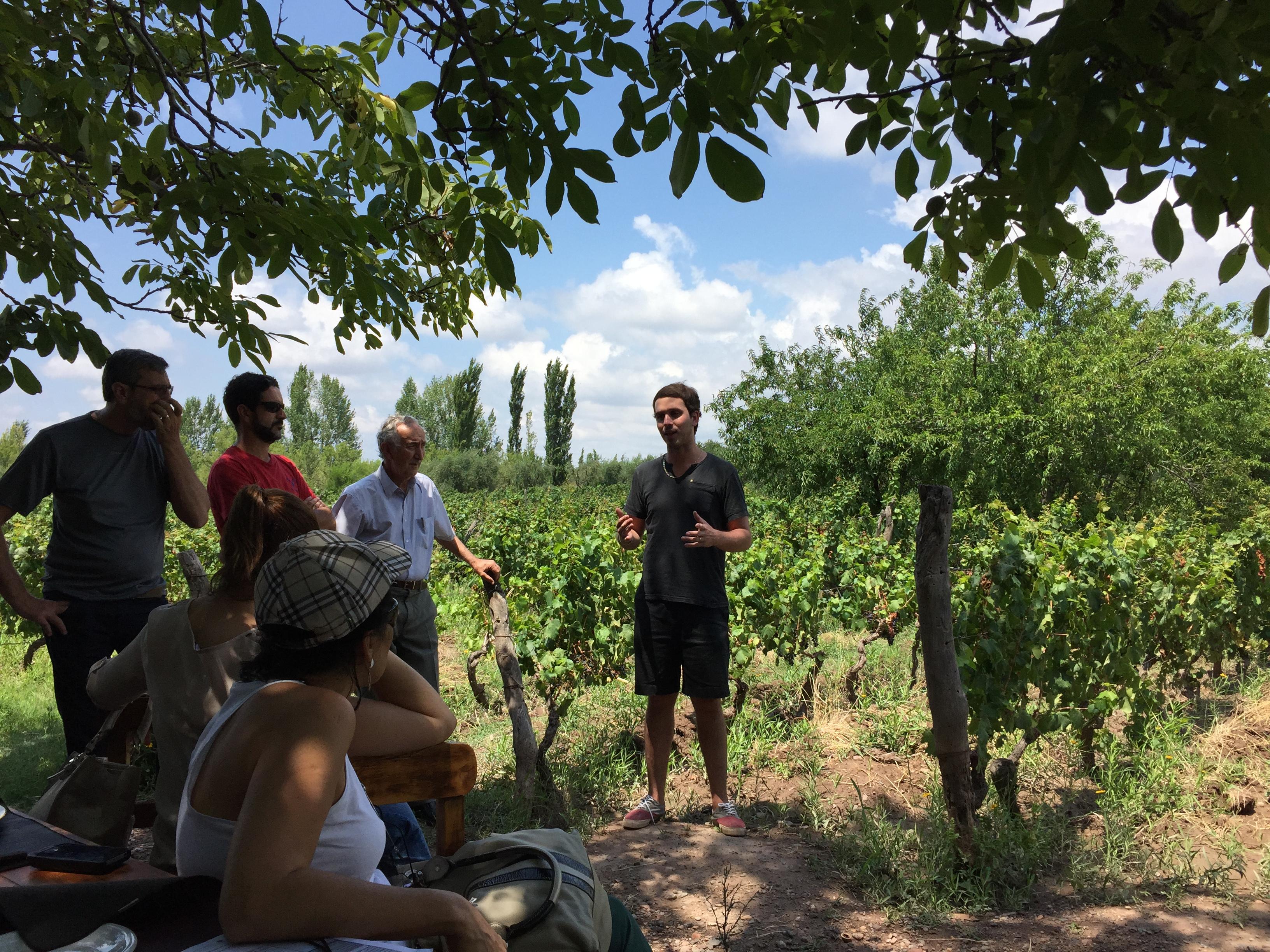 Bodega Cecchin Vinhos Orgânicos 4